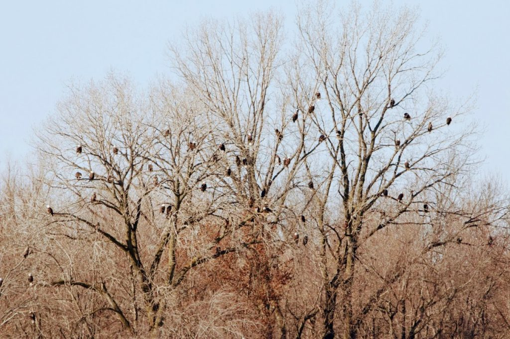 A communal roost: A communal roost describes a place where a group of birds regularly congregate to perch or sleep