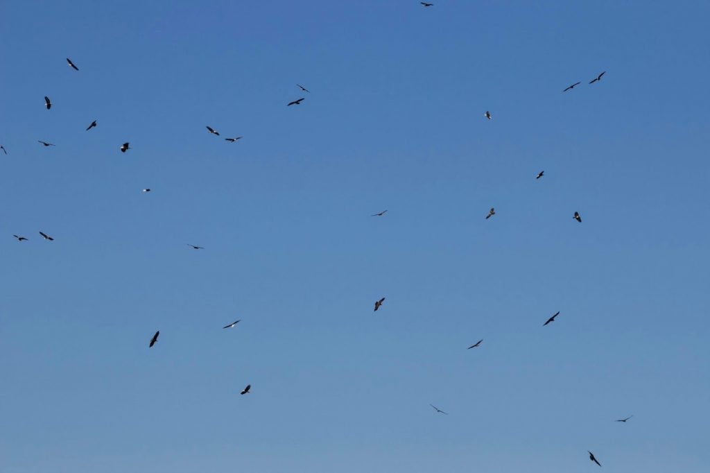 A kettle of eagles: A kettle describes a group of birds wheeling and circling in the air