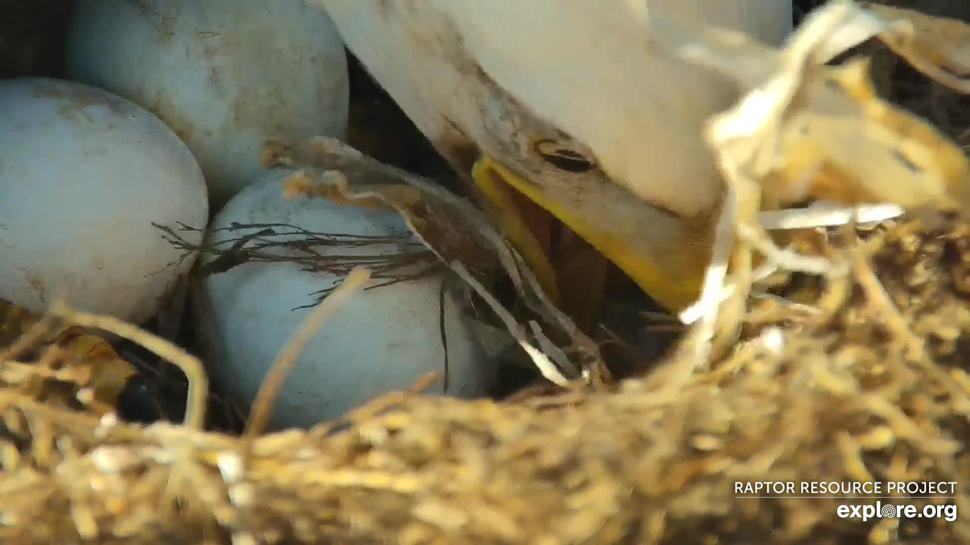 Incubation and Egg Quiz