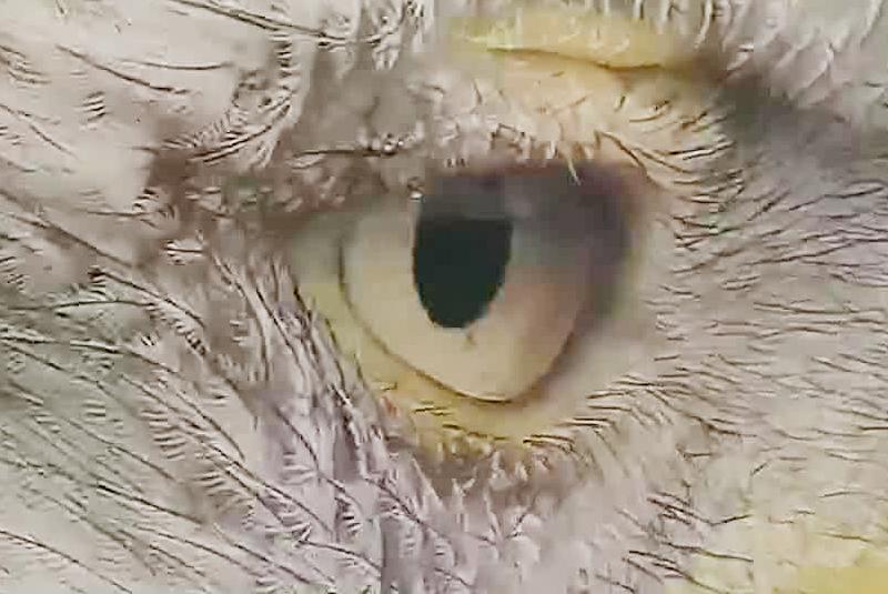 An eagle's eye