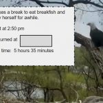 Elapsed Time with Eagles